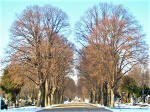 Alleen, Straßen und Wege am Zentralfriedhof und eine Stille, die ihresgleichen in der Großstadt sucht. Foto: oepb
