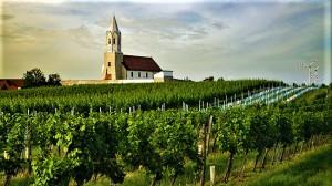 Blick auf Weingarten in Höflein. Das Gebiet einigte sich auf die drei Stufen Gebietswein, Ortswein, Riedenwein und setzt auf renommierte Sorten: beim Weißwein Chardonnay, Weißburgunder und Grüner Veltliner, beim Rotwein Zweigelt und Blaufränkisch. Foto: ÖWM / Marcus Wiesner