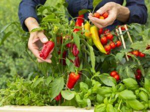 Gemüse-Foto: © bellaflora