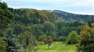 Naherholungsgebiet Wald! Diese wertvolle Ressource gilt es nachhaltig zu schützen, damit sich auch noch die nachkommenden Generationen an sattem Gründ bei guter Luft und Lauten der Tiere des Waldes erfreuen können. Foto: © oepb