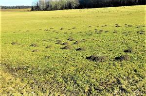 Die Maulwurf-Hügel zeugen von einem guten und fruchtbaren Boden. Foto: © oepb