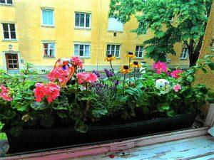 Blick aus einem Wiener Gemeindebau, der mit ein bisserl Blumenschmuck am Fensterbrett bei weitem nicht mehr so grau erscheint. Foto: © oepb