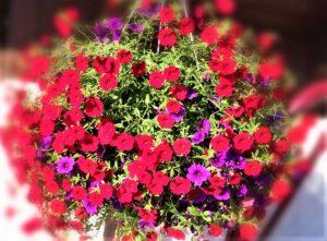 Eine Blumenampel ist für die Loggia oder den Balkon bestens geeignet. Foto: © oepb