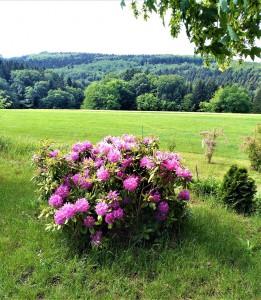 Für den Rhododendron ist zwar noch ein bisserl Zweit – er erblüht meist Ende Mai – dennoch ist gerade jetzt auch für diese Pflanze eine liebevolle Pflege immens wichtig. Foto: © oepb