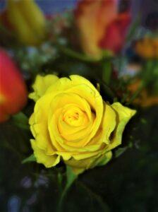 Für eine Rose für die Liebste im trauten Heim sollte ohnehin rund um´s Jahr Zeit sein. Foto: © oepb