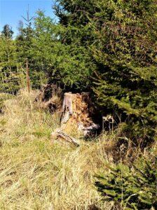 Das, was abgestorben ist, bietet zahlreichen Insekten und Kleingetier wertvollen Unterschlupf. Außerdem erwacht in unmittelbarer Nachbarschaft zu altem Holz erneut ein neues Leben. Foto: © oepb