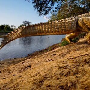 Krokodil Foto: © Michael Nick Nichols