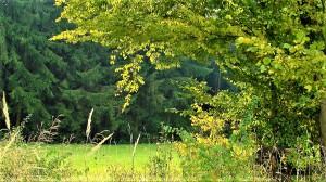 """""""Nur ein bewirtschafteter Wald ist ein klimafitter Wald!"""", so Bauernbund-Präsident Georg Strasser und EU-Abgeordnete Simone Schmiedtbauer unisono. Sie begrüßen die 350 Mio. Euro an Investitionen in die Forstwirtschaft und den Klimaschutz. Foto: © oepb"""