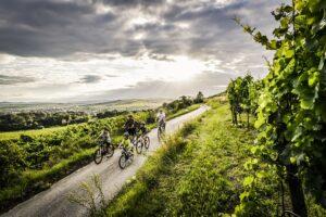 """Die Kampagne """"Auf zum Wein"""" lockt Heimaturlauber in Österreichs Weinbaugebiete. Foto: © ÖWM / Robert Herbst"""