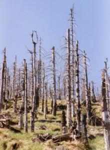 """Was in den frühen 1980er Jahren mit dem """"Sauren Regen"""" begonnen hatte, dieses Werk setzt nun der vermehrte Borkenkäfer-Auftritt fort. Das Bäume-Sterben im Wald schreitet munter voran. Die Schuld an diesem aktuellen Klima-Wandel liegt einzig und allein bei uns, den Menschen. Doch was tun wir allesamt dagegen? NICHTS, weil ein Großteil der 8 Milliarden Erdenbürger, die wir derzeit um uns haben, dumm, rücksichtslos und nach wie vor ausbeuterisch sind! Foto: bdk"""