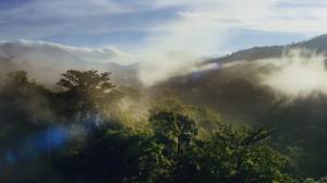 In Zusammenarbeit mit WWF startet die VELUX-Gruppe zahlreiche Wald- und Biodiversitätsprojekte, die dazu beitragen sollen, den Klimawandel zu bekämpfen, den Verlust von Lebensräumen zu stoppen und die Artenvielfalt zu erhalten. Foto: © VELUX