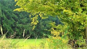 """""""Der Wald ist eine CO2-Senke, stützt den Erhalt der Artenvielfalt, stellt den Baustoff für Zukunft bereit und ist einfach unsere grüne Lunge."""", so Simone Schmiedtbauer, ÖVP-Agrarsprecherin im EU-Parlament. Foto © oepb"""