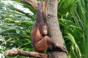 Foto: © Zoo Rostock / Joachim Kloock